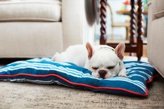 0_18_PuppySleeping_056